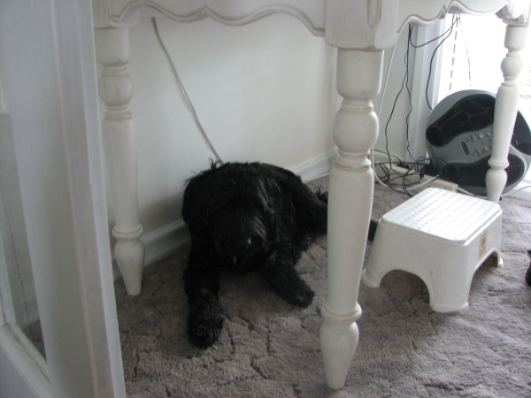 One of my favourite hiding places at home, under the desk. Raffles is too big to fit.