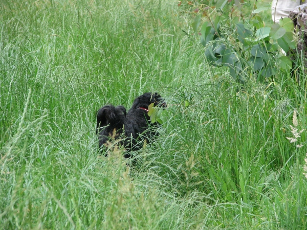 I find long grass a great hiding place, bet you can't see me.