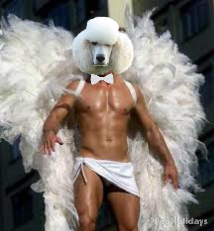 Angel Raffles